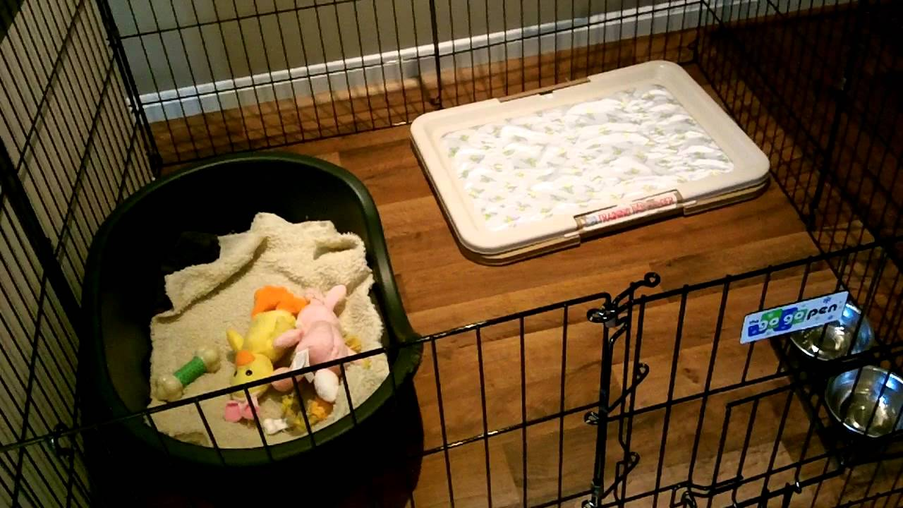 Puppy Playpen For 4 Week Old Mini Aussies Rest Time Youtube