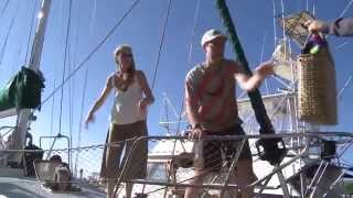David Rothenberg playing with Humpback whales, excerpt from French film