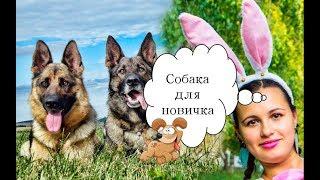 Собаку какой породы лучше завести новичку ? ♥♥♥ Reneya FEV