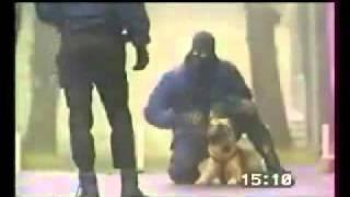 小 心 香 港 警 犬 ' 馬 連 奴 '