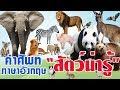 คำศัพท์ภาษาอังกฤษ เรื่องสัตว์ต่างๆ L พร้อมรูปและคำอ่าน L เหมาะสำหรับอนุบาลและเด็กเล็ก
