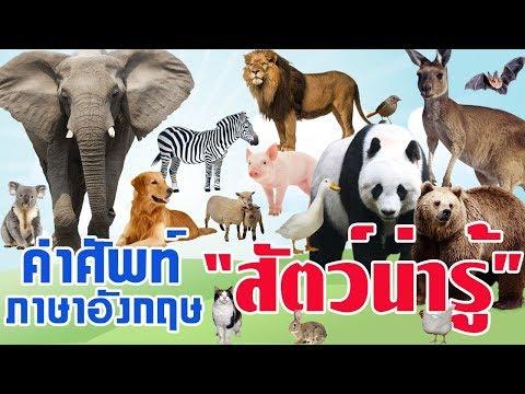 คำศัพท์ภาษาอังกฤษ เรื่องสัตว์ต่างๆ l พร้อมรูปและคำอ่าน l คำศัพท์ภาษาอังกฤษในชีวิตประจำวัน
