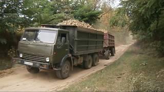Вывоз сахарной свеклы 2017 | Sugar beet trucks collection