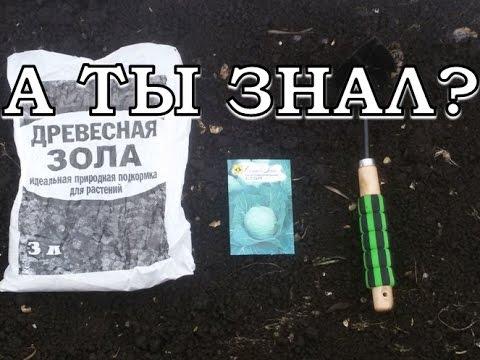 Сеем КАПУСТУ на РАССАДУ в теплице