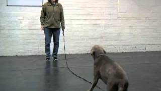 Barb Levenson Dog Training Centers, Obedience Classes, Oakmont, Pa