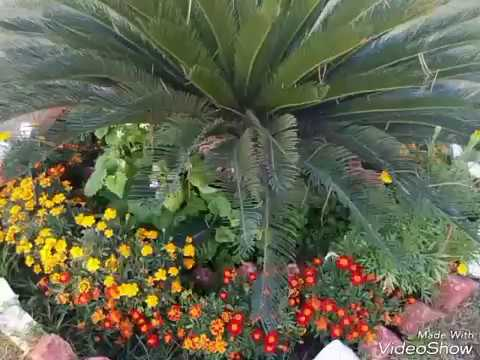305 Winter Spring And Summer Flowers Of India 20217 Youtube