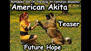 Ryan | Ruthdales Son Of The King Centurion Gladiator | American Akita | Future Hope | Teaser