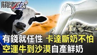 有錢就是任性!卡達「斷奶」沒在怕 空運萬頭牛到沙漠吹冷氣自產鮮奶! 【關鍵時刻】20190725-3 馬西屏