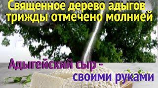 Священное дерево трижды отмечено молнией Адыгейский сыр своими руками Кавказское застолье