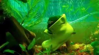 Аэрация в аквариуме, как сделать мелкие пузырьки в аквариуме. Самодельный аэратор.