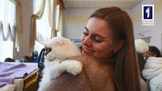 Афіша+ Виставка котів