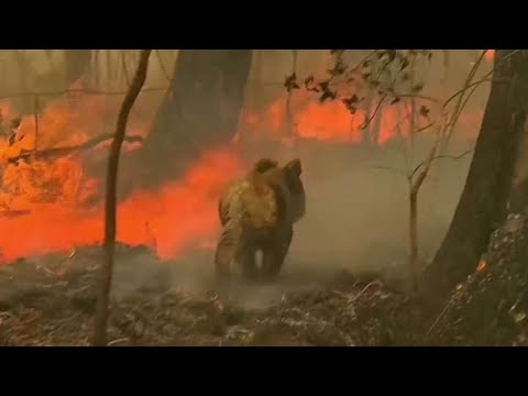 480M animals potentially killed in Australia wildfires