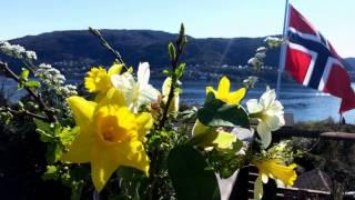 Stille en morgen - Bjarte Leithaug
