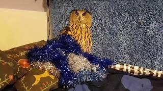 Филин Ёль: как поймать новогоднее настроение и не спалиться. Сова готовится к новому Году.