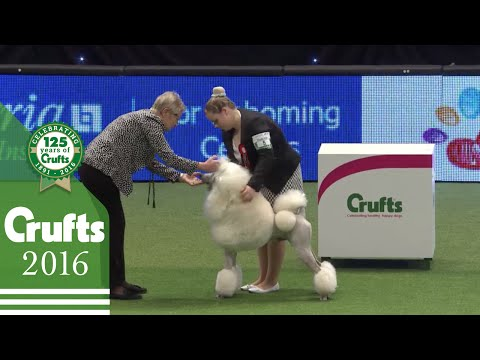 International Junior Handling Competition Part 1 | Crufts 2016