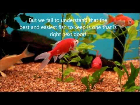 The Goldfish Tragedy (Watch This Before You Buy A Goldfish!!)