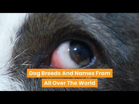 Dog Breeds Worldwide