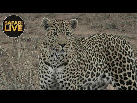 safariLIVE - Sunrise Safari - October 16, 2018