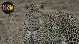 safariLIVE - Sunrise Safari - October 16, 2018 thumbnail