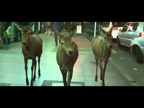 Awesome Tooheys Deer Ad.mp4