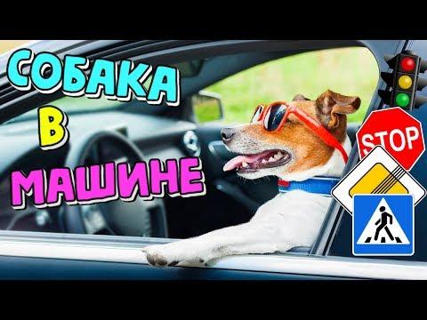 Как перевозить собаку в машине на дальние расстояния