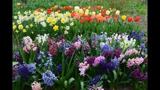 Весенняя мелодия цветов. Very beatiful music.