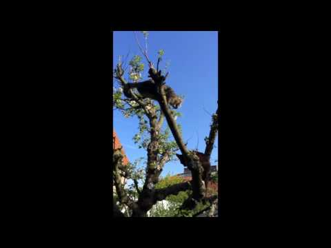 Two cats fighting in tree