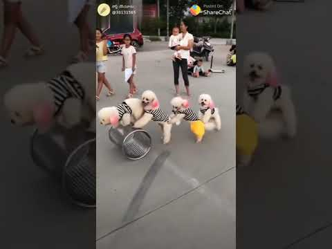 Dogs circus