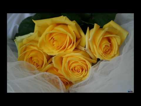 Цветы Baccara и др Авт Вяч Гаврилов