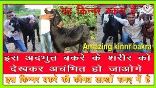 ऐसा अजीब किन्नर बकरा कभी नहीं देखा होगा, yah bakara kinnar hai, Amazing shemale goat