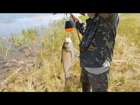 ловля толстолобика на удочку наживка ароматизатор