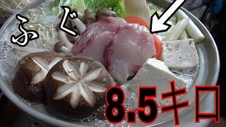 【フグ大食い!】巨大とらふぐを使って絶品フルコース作ってみた thumbnail
