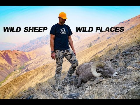 Wild Sheep, Wild Places - A Bighorn Sheep Hunt