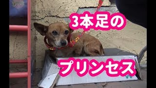 動物保護団体に届いた1本のメッセージによって、 野良犬の命がまた1つ救...