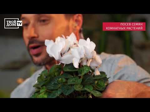 Вопрос: Семена комнатных растений нужно проращивать исключительно весной?