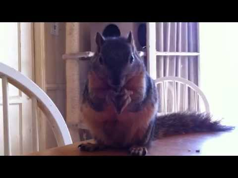 Squirrel Approved Organic Coconut Flax Granola