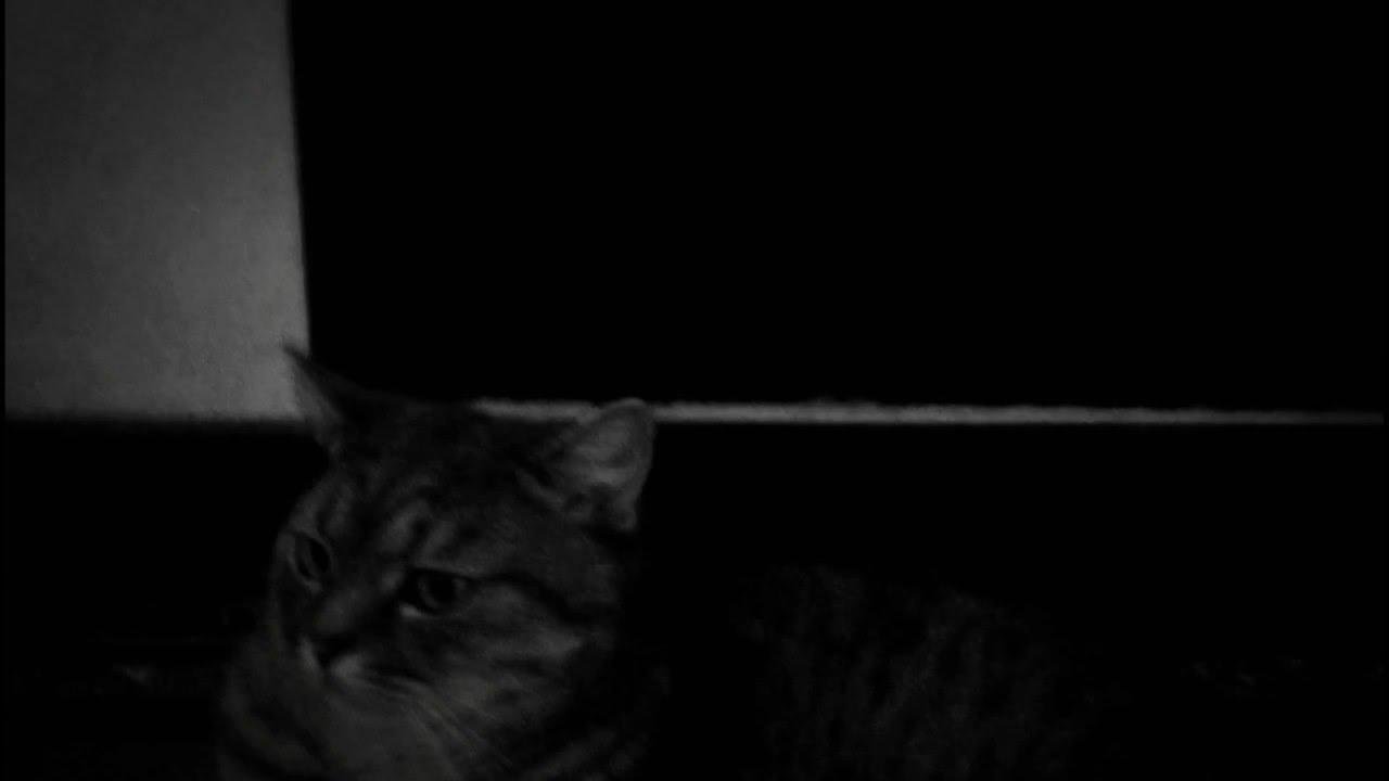 Страшилка черный кот