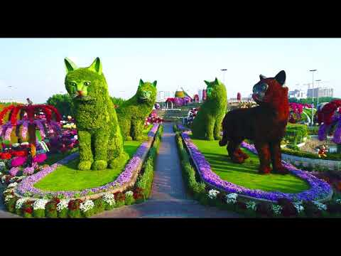 Dubai miracle garden Everyone going there it's absolutely beautiful 😊♥️♥️😊♥️♥️😊🙂