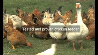 Chicken Feeders | Santa Barbara | Ca | Automatic Chicken Feeder | Feeding Chickens | Poultry Feeders