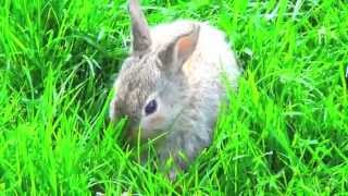 Милый зайчик Шнуфель на траве