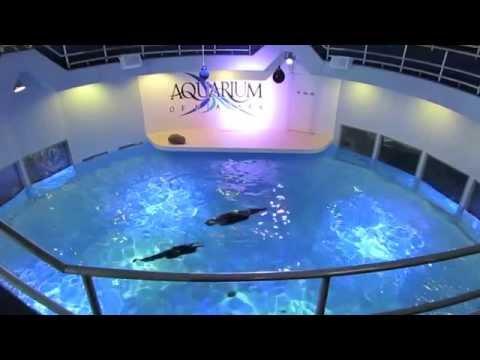 Aquarium Of Niagara Mashpedia Free Video Encyclopedia