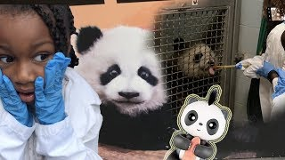We Meet and Feed REAL LIFE Pandas! Fingerlings Panda