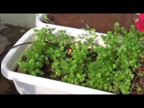 My  Organic Terrace Garden