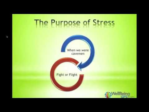 Stress - How it Affects Us and How to Change That // WellBeingGPS.co