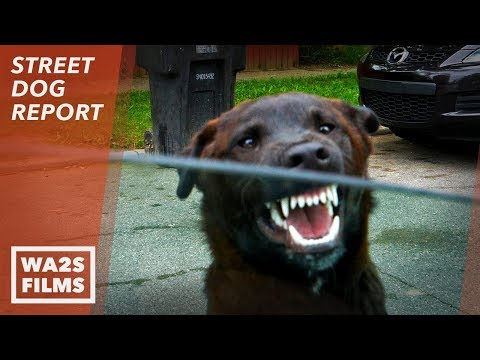 No Hope For Dogs As Neighbor Said He Will Shoot This Stray Dog By Drug House If Not Rescued