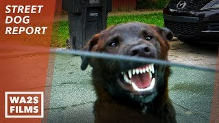 No Hope For Paws Neighbor Said He Will Shoot Stray Dog  Hope For Dogs | My DoDo