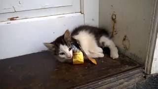 Ленивый кот не мяукает part #2