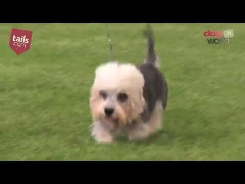 Windsor Dog Show 2016 - Terrier group