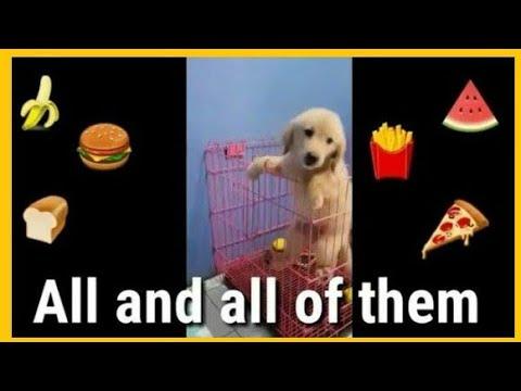 Puppy Escapes