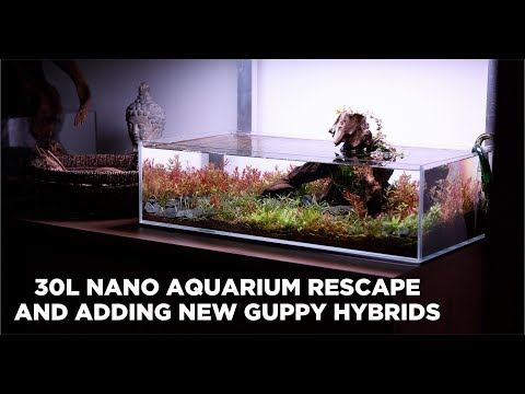 30L NANO AQUARIUM RESCAPE - CORRECTING MISTAKES AND ADDING NEW GUPPY HYBRIDS